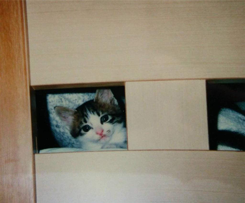 f:id:maricats:20200130182137j:image
