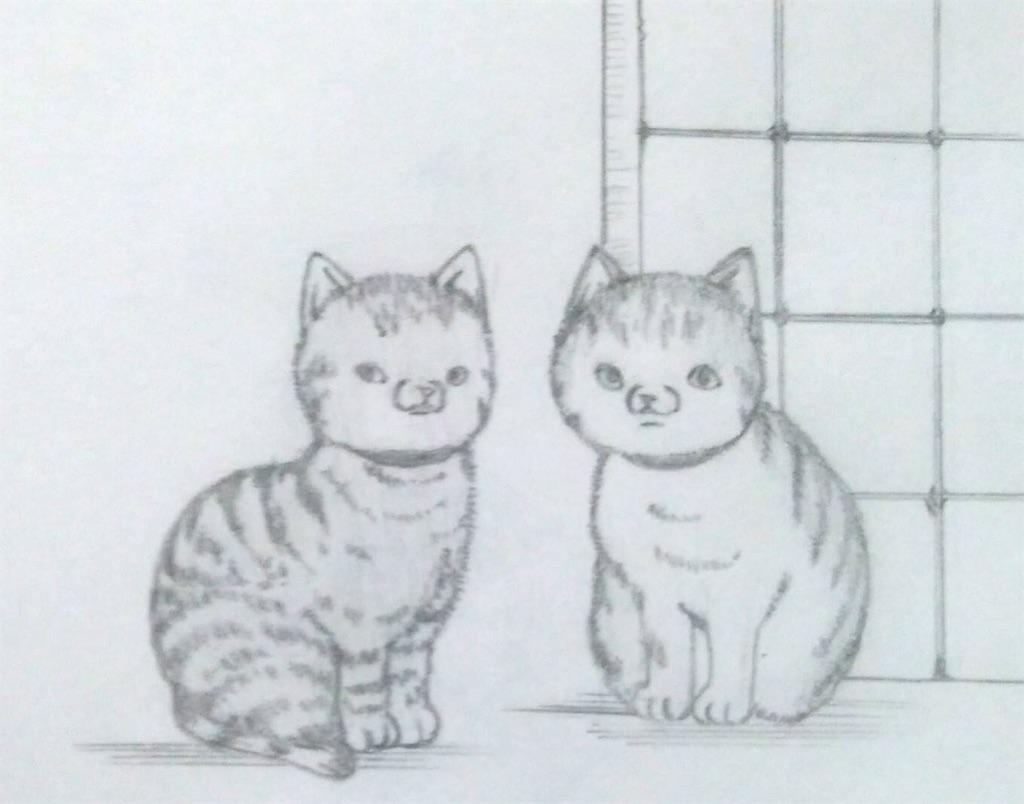 f:id:maricats:20200202192404j:image