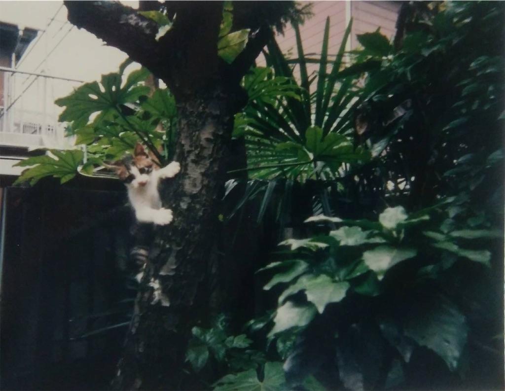 f:id:maricats:20200202192410j:image