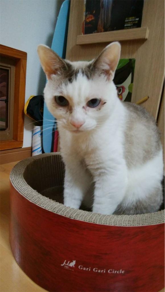 f:id:maricats:20200221131426j:image