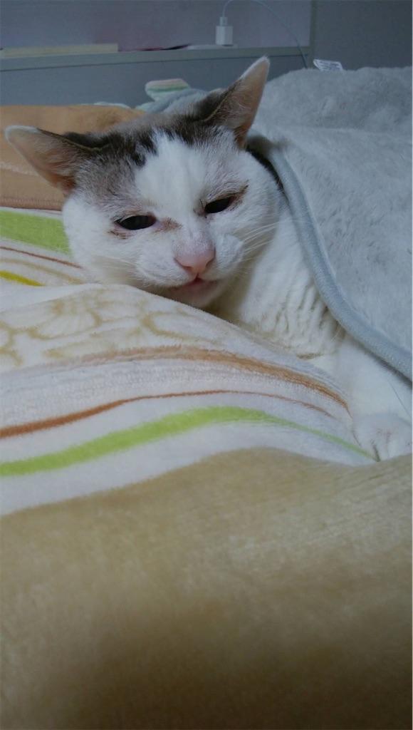 f:id:maricats:20200221131801j:image