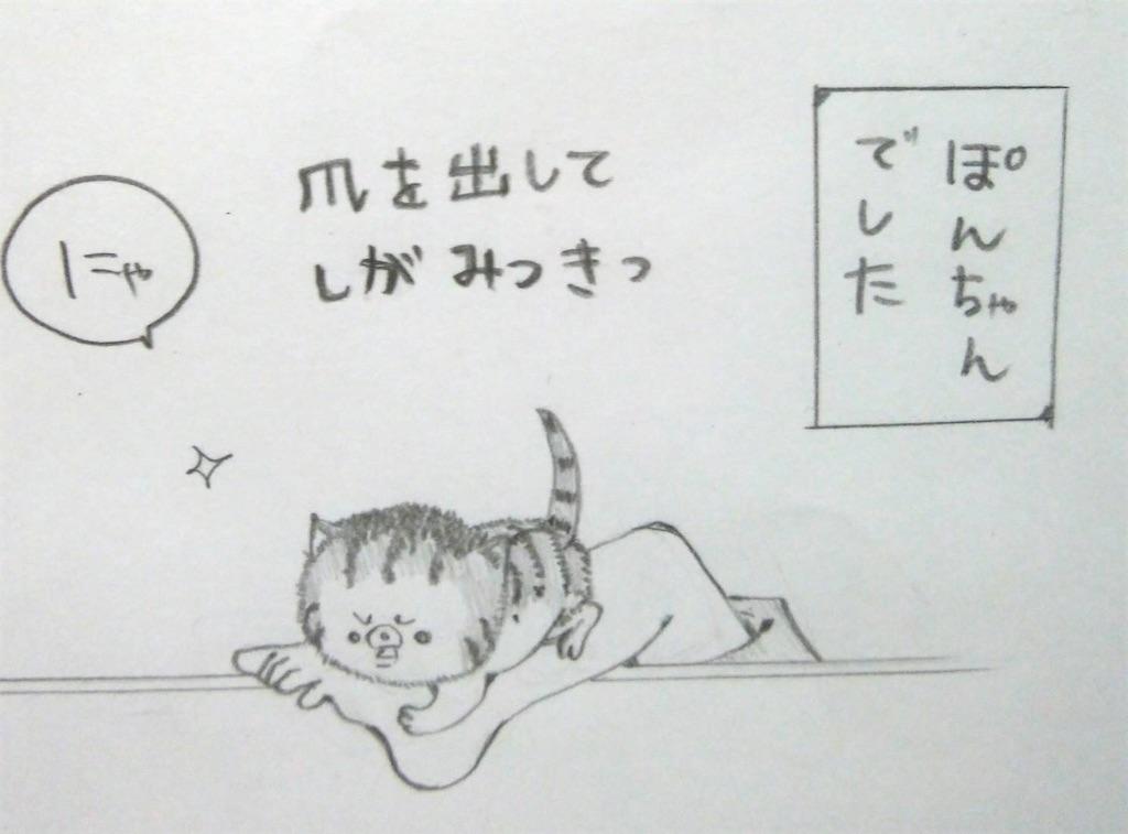 f:id:maricats:20200226205914j:image