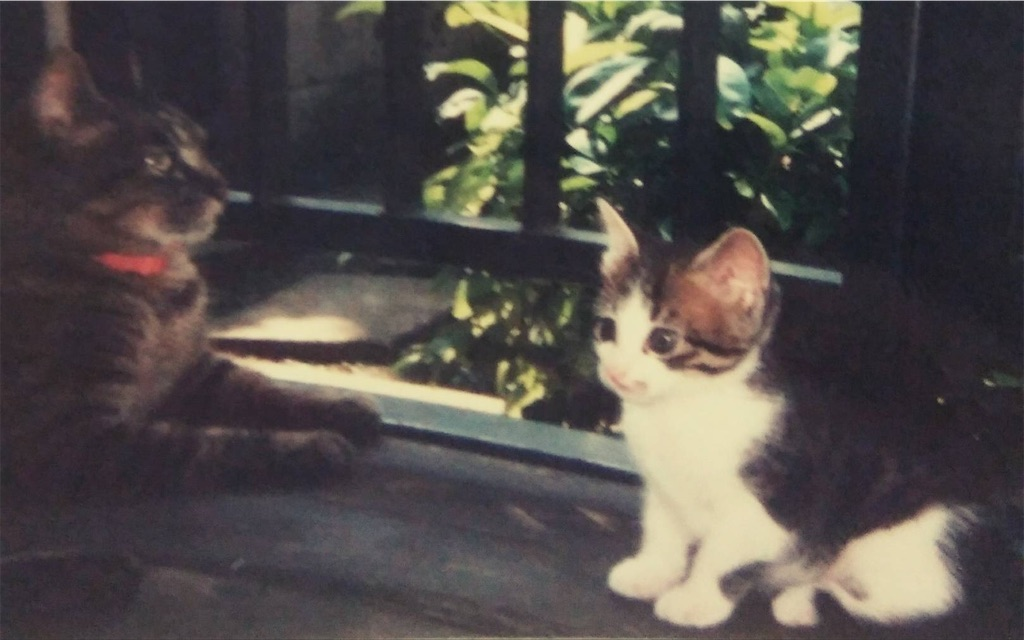 f:id:maricats:20200227195837j:image