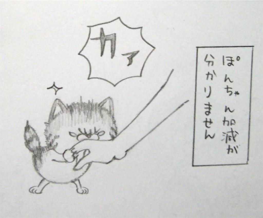f:id:maricats:20200227195848j:image