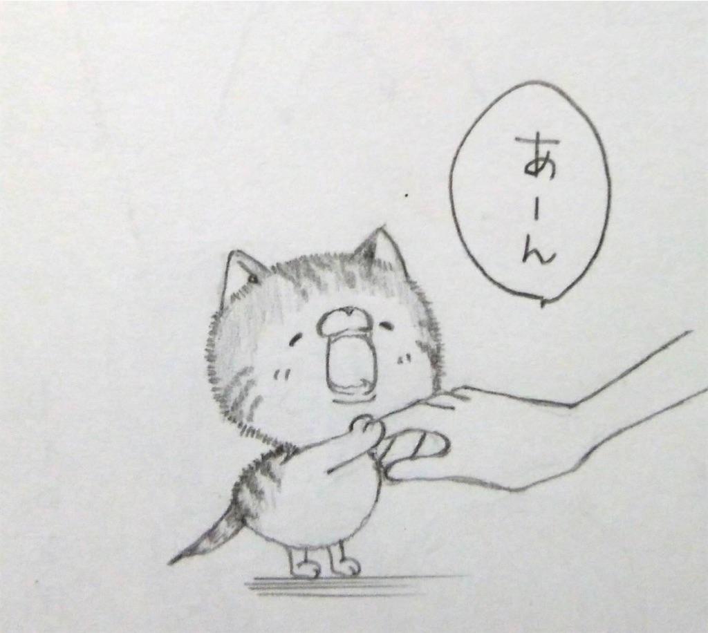 f:id:maricats:20200227195852j:image