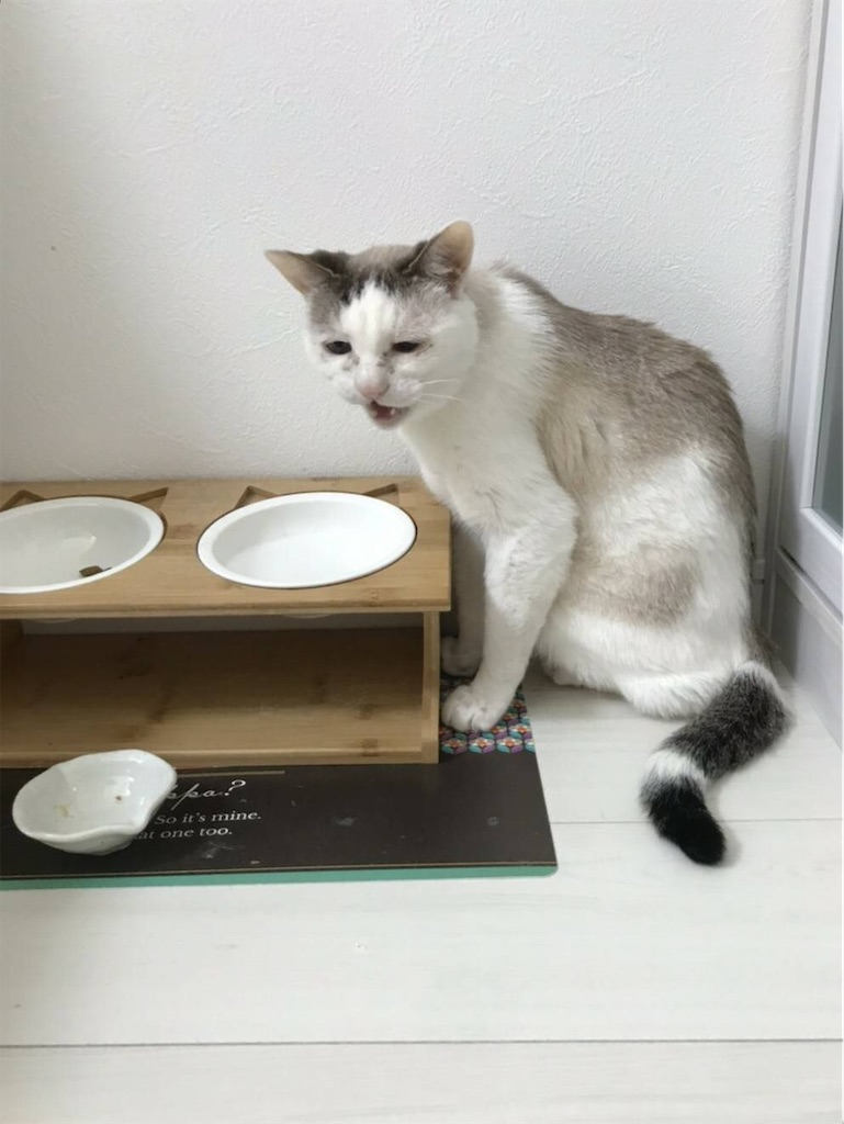 f:id:maricats:20200302201812j:image