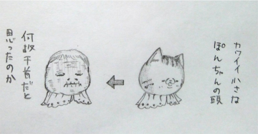 f:id:maricats:20200508184143j:image