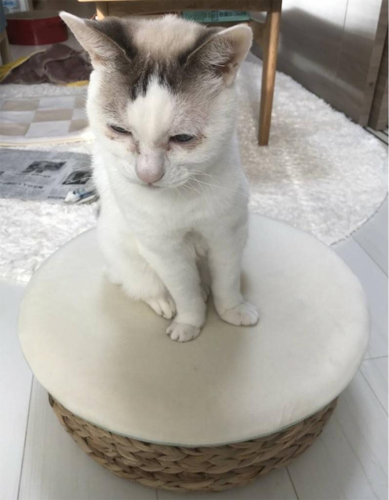 f:id:maricats:20200509164716j:image