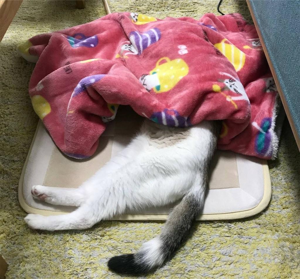 f:id:maricats:20200527191635j:image