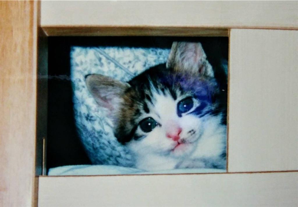 f:id:maricats:20200530195902j:image