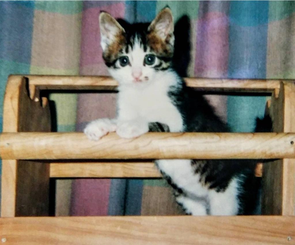 f:id:maricats:20200530195912j:image
