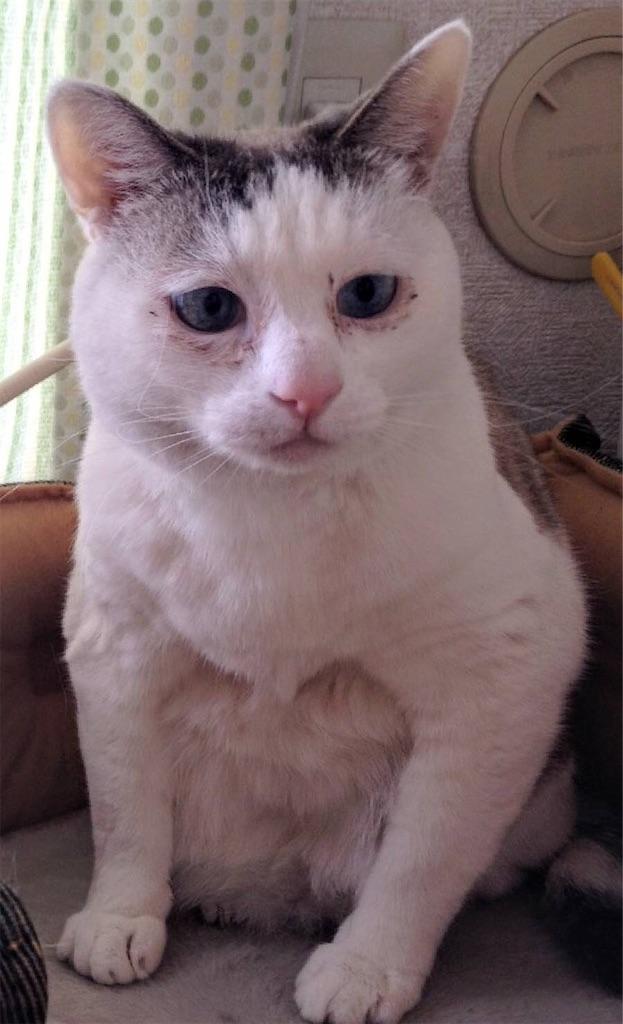 f:id:maricats:20200530195924j:image