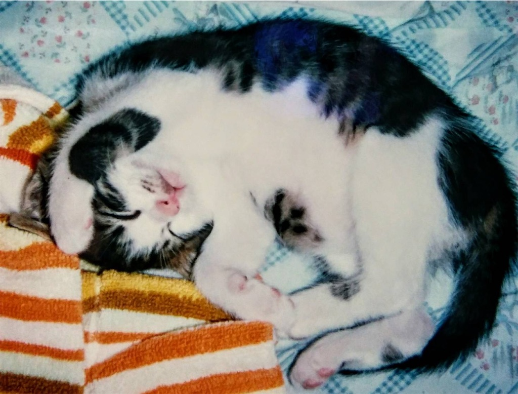 f:id:maricats:20200530195928j:image