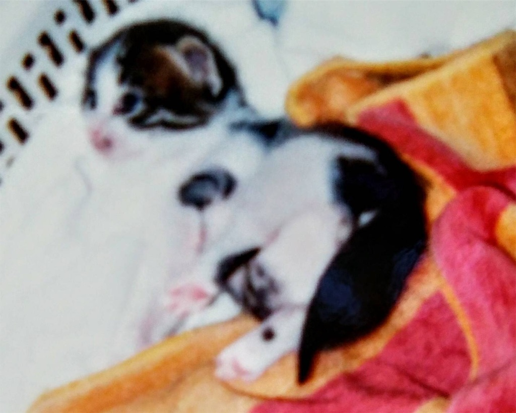 f:id:maricats:20200530195932j:image