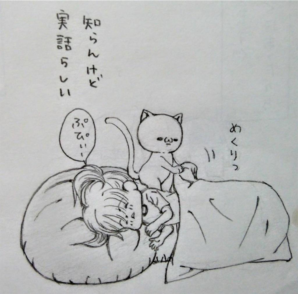 f:id:maricats:20200727195130j:image