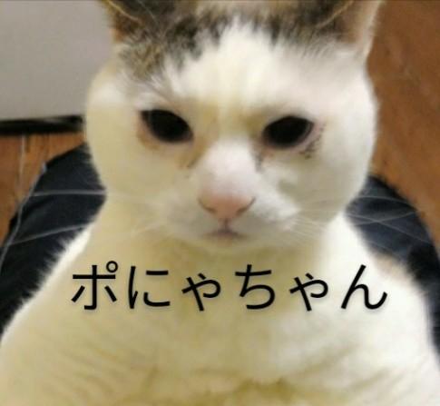 f:id:maricats:20200806130835j:plain