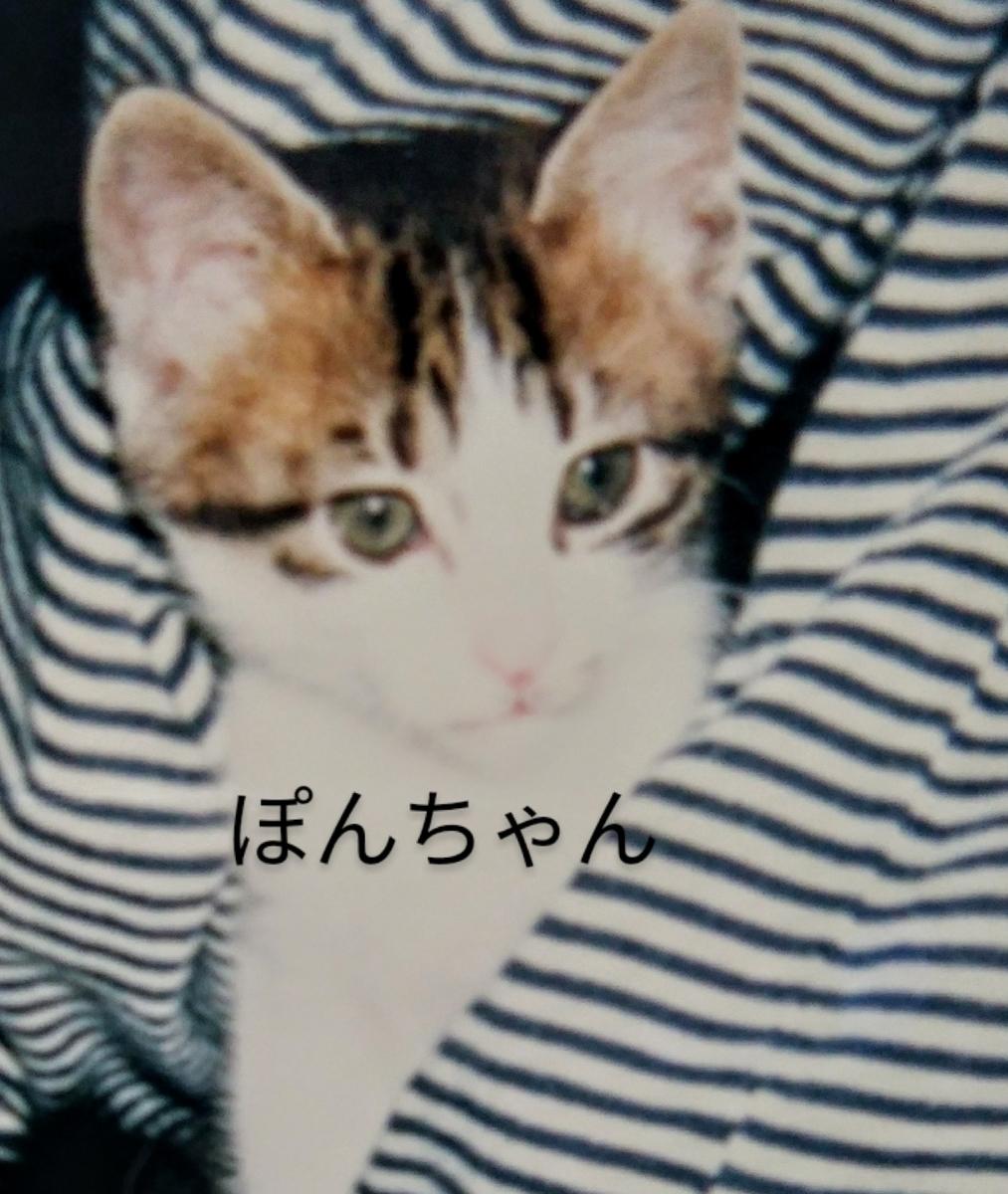 f:id:maricats:20200806130905j:plain