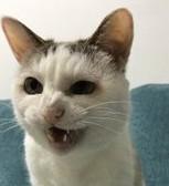 f:id:maricats:20200815172626j:plain