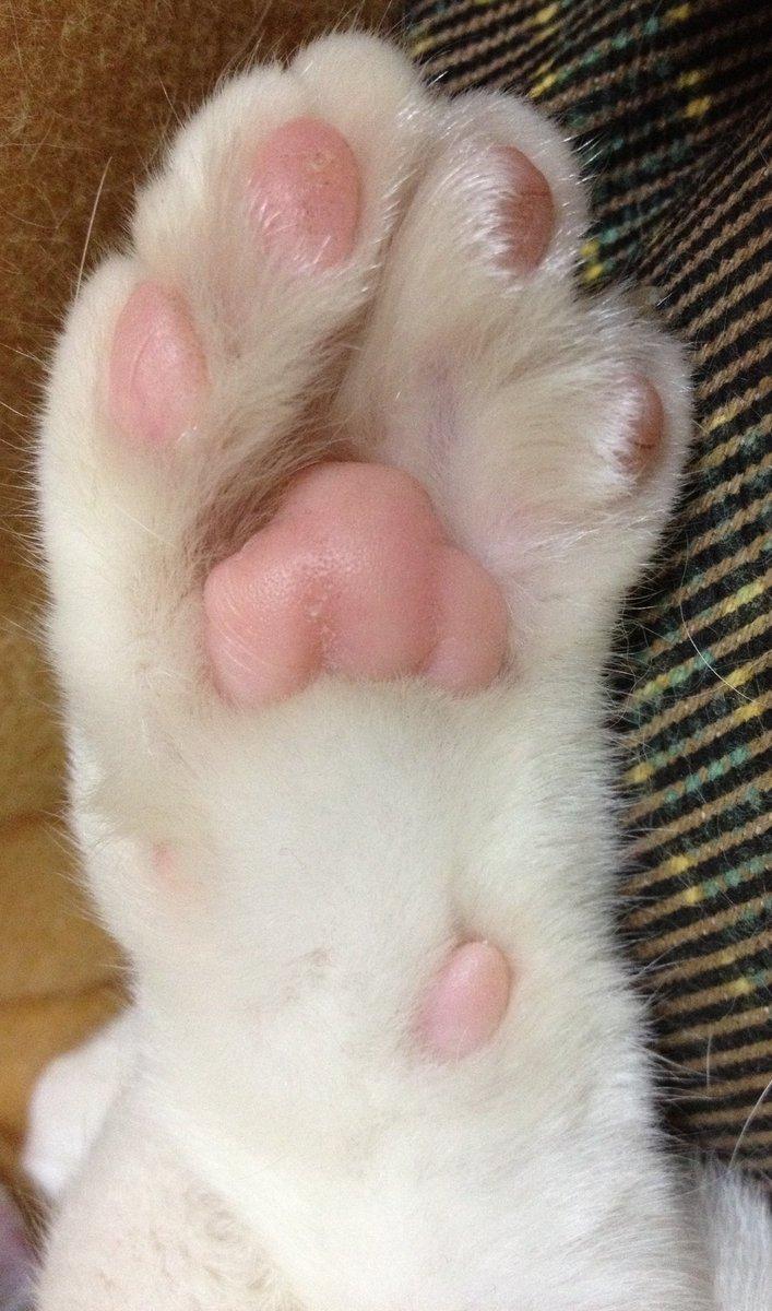 f:id:maricats:20200816011519j:plain