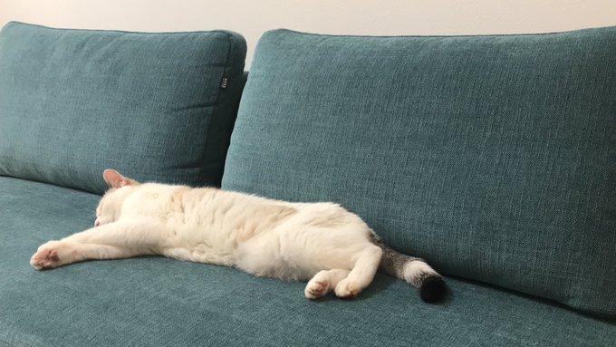 f:id:maricats:20200816123639j:plain