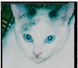 f:id:maricats:20200829103958j:plain