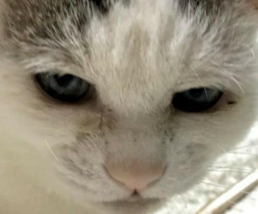 f:id:maricats:20200903234429j:plain