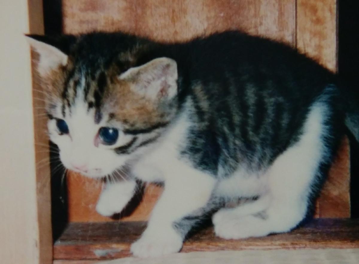 f:id:maricats:20200904000144j:plain
