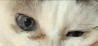 f:id:maricats:20200905213539j:plain