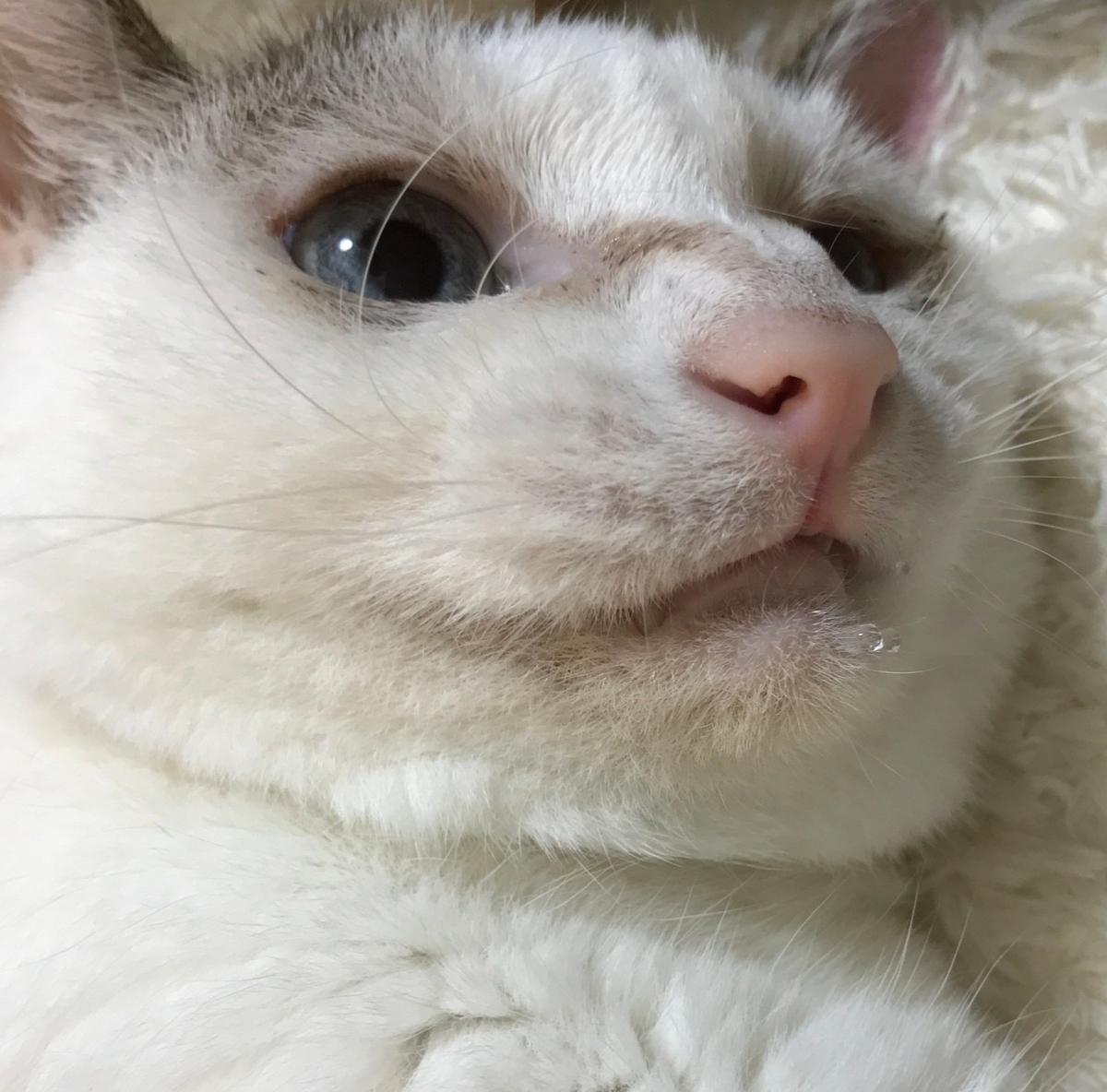 f:id:maricats:20201020200553j:plain