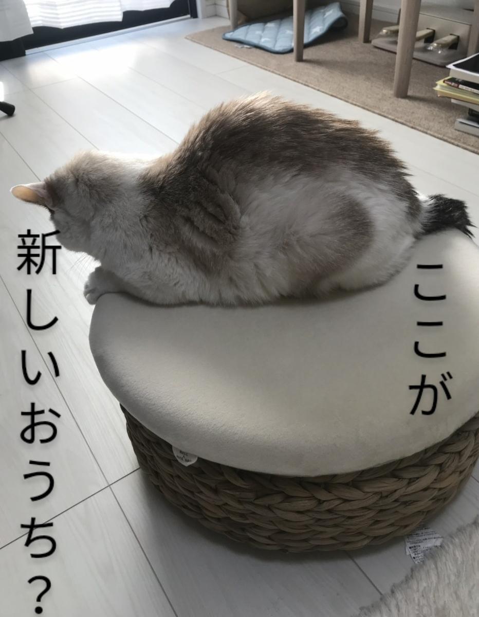 f:id:maricats:20201212004320j:plain