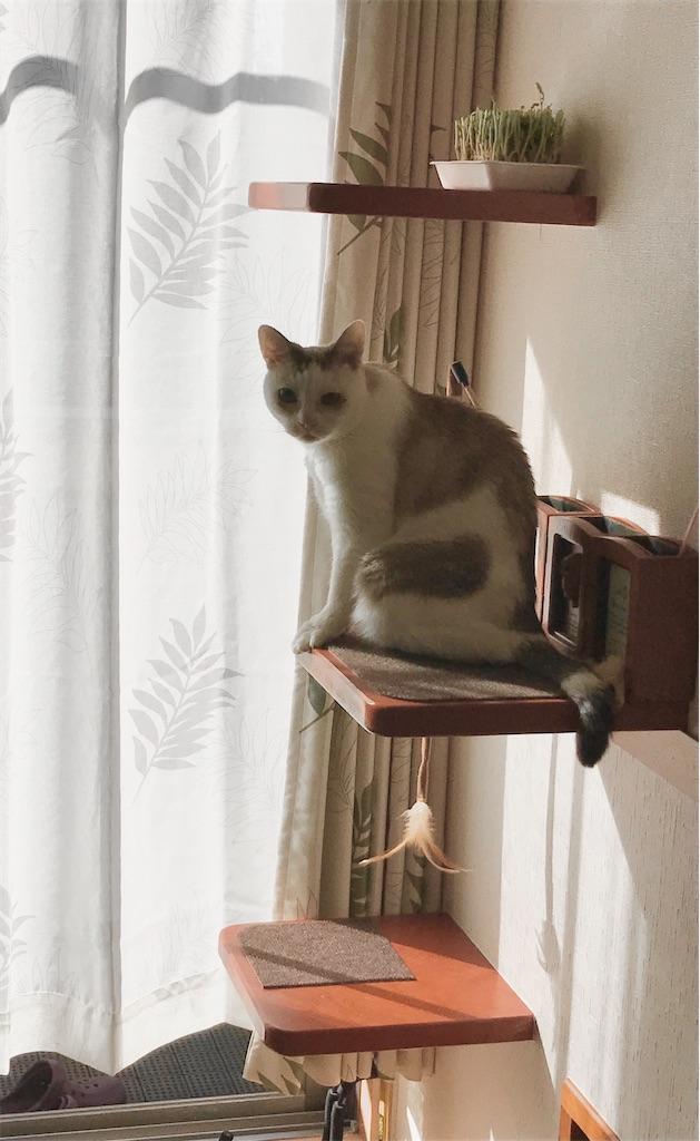 f:id:maricats:20201217231914j:plain