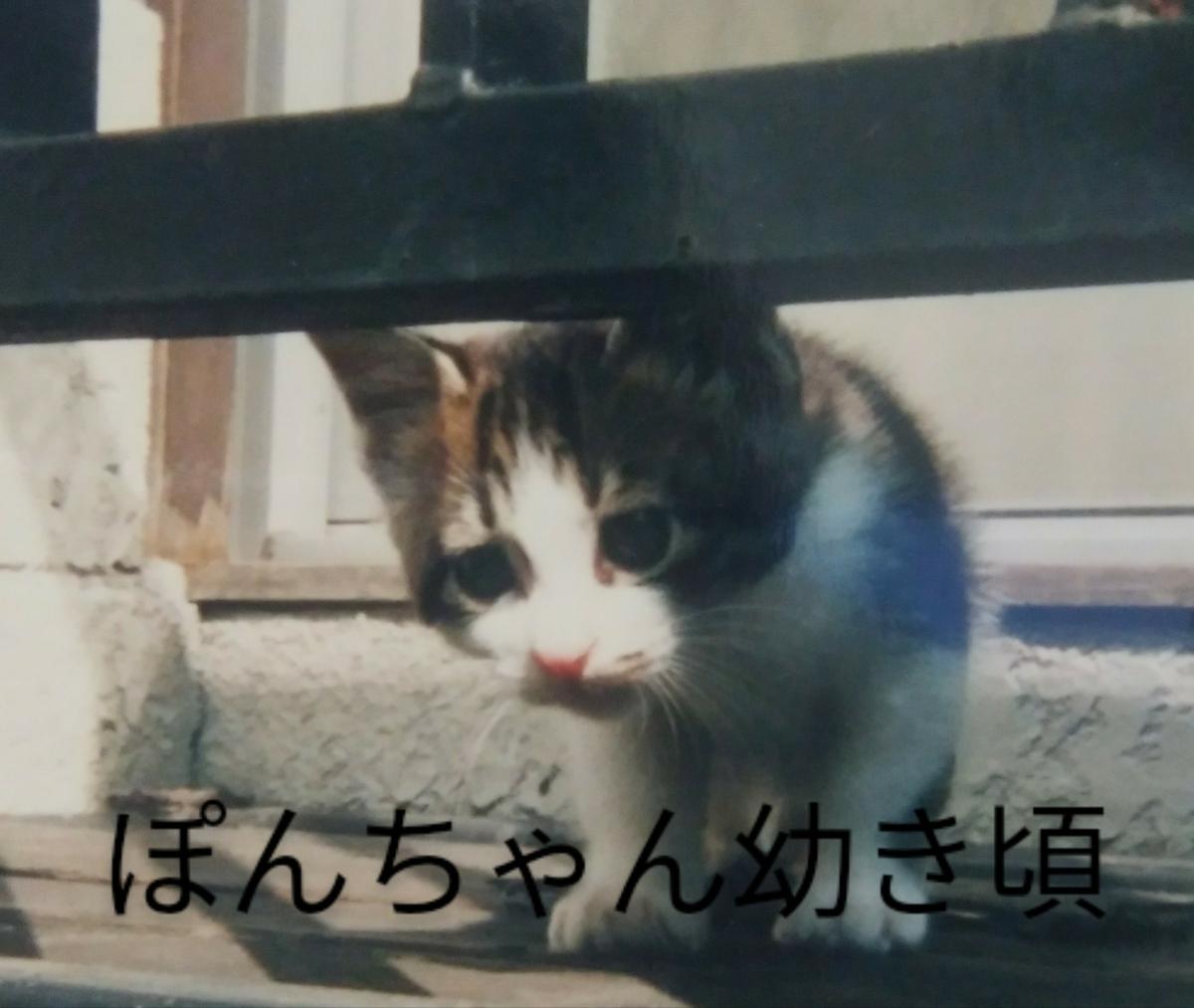 f:id:maricats:20201230172147j:plain