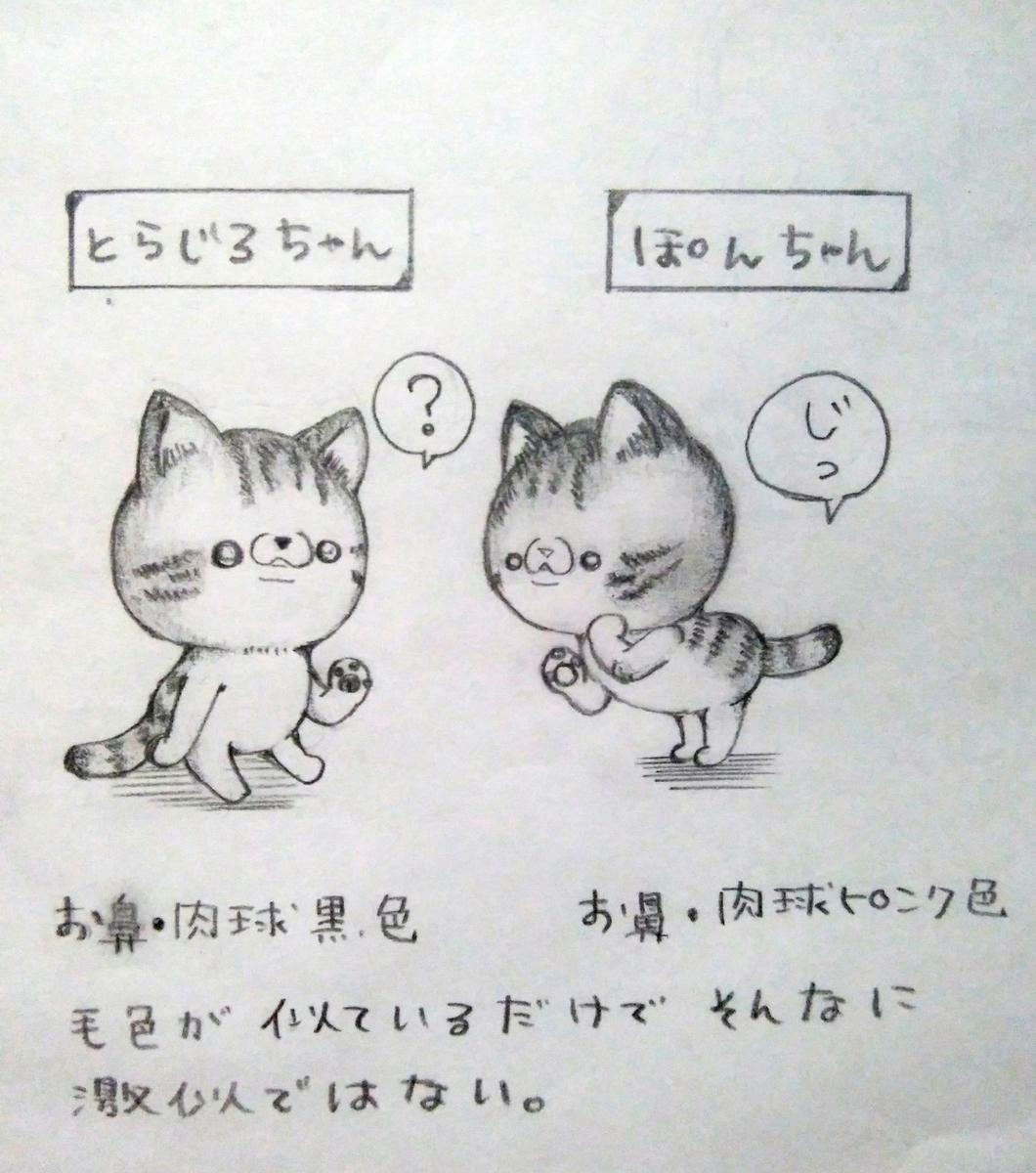 f:id:maricats:20201230202735j:plain