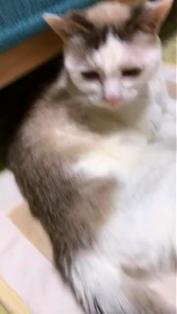 f:id:maricats:20210131213304j:plain