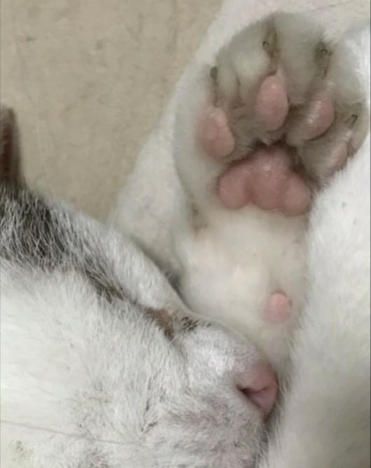 f:id:maricats:20210411181627j:plain