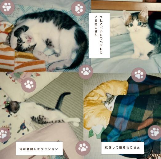 f:id:maricats:20210706135803p:plain