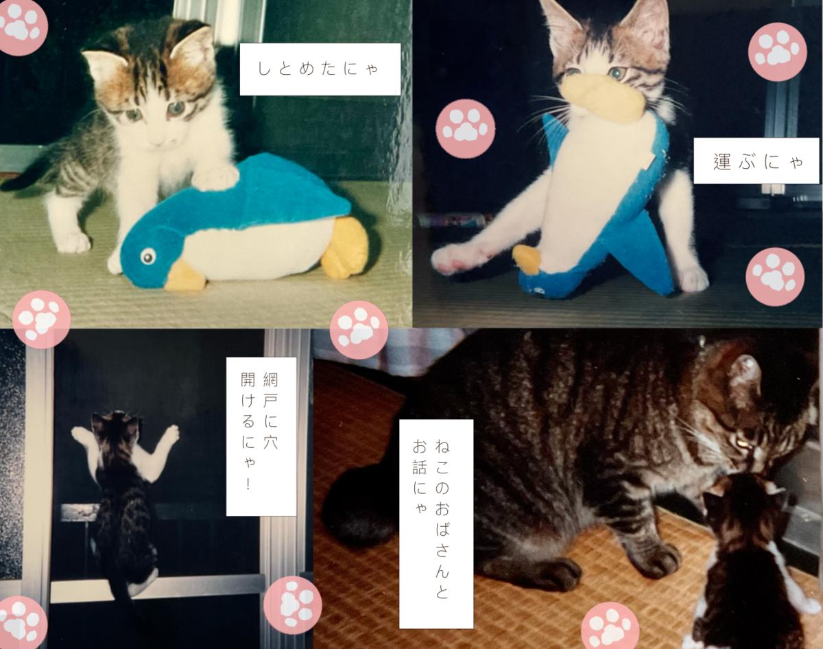 f:id:maricats:20210706163526p:plain