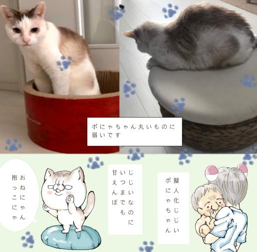 f:id:maricats:20210706163623p:plain