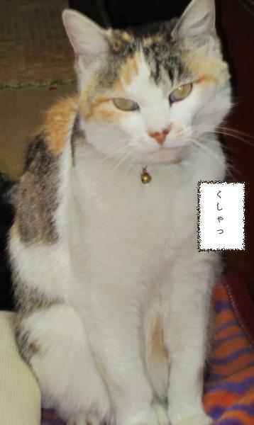 f:id:maricats:20210710000943p:plain