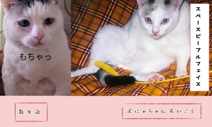 f:id:maricats:20210722101238p:plain