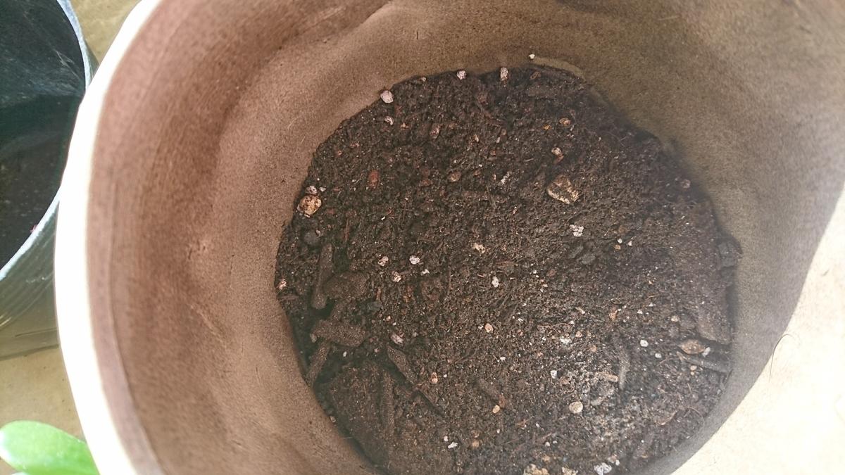 根腐れ防止剤が隠れるくらい土を入れる