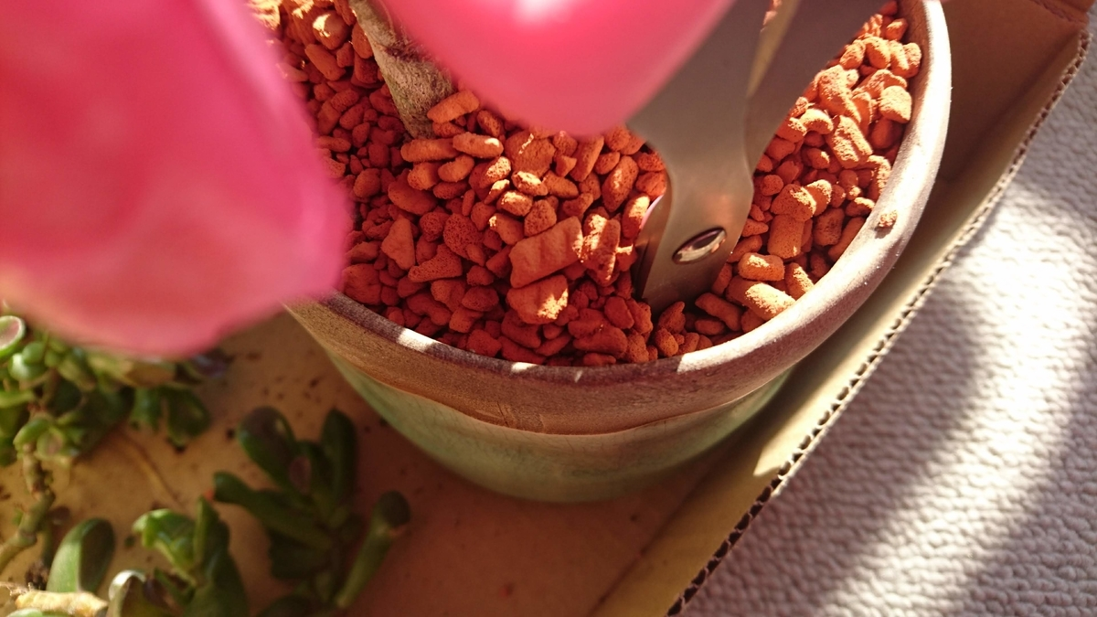 セラミスグラニューと多肉植物