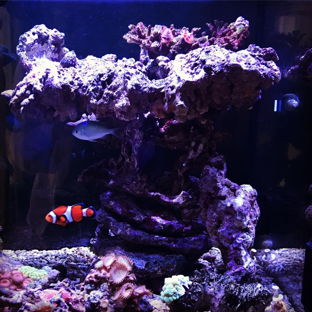 f:id:marine_aqua:20170610170358j:plain
