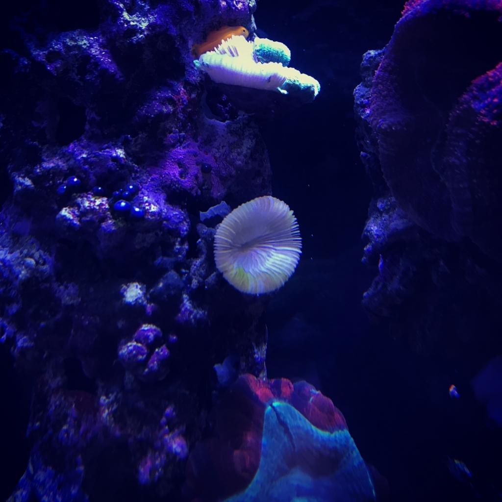 f:id:marine_aqua:20171119192828j:plain