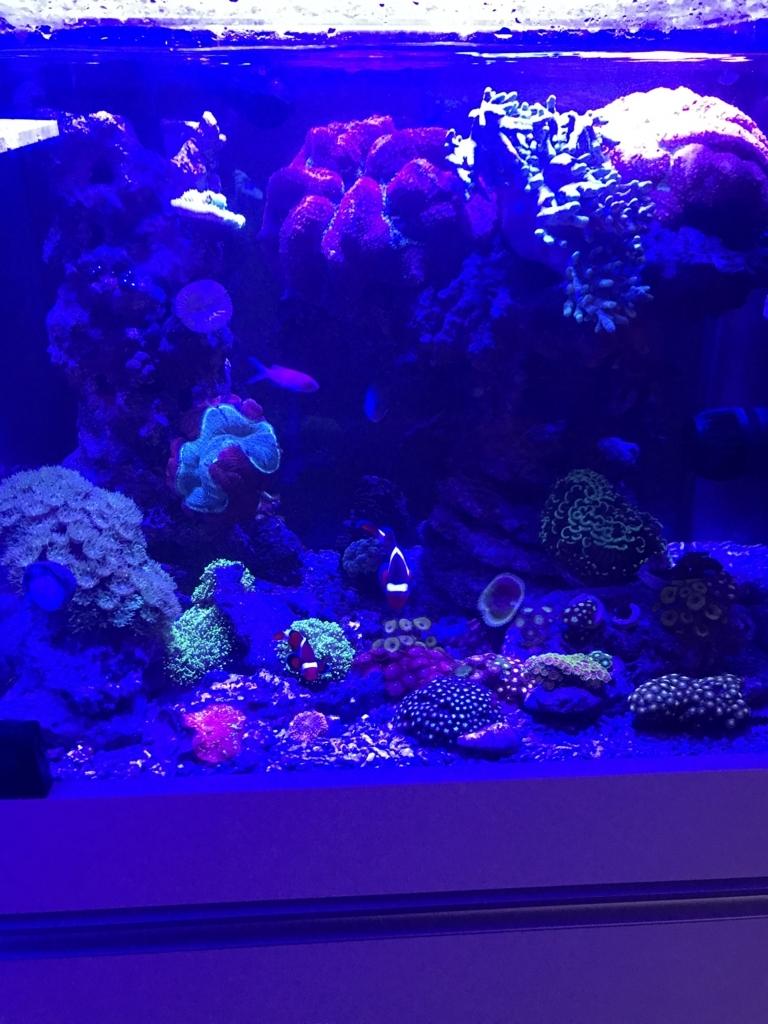 f:id:marine_aqua:20171120211946j:plain