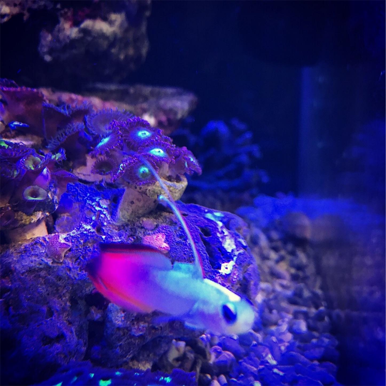 f:id:marine_aqua:20171218201235j:image