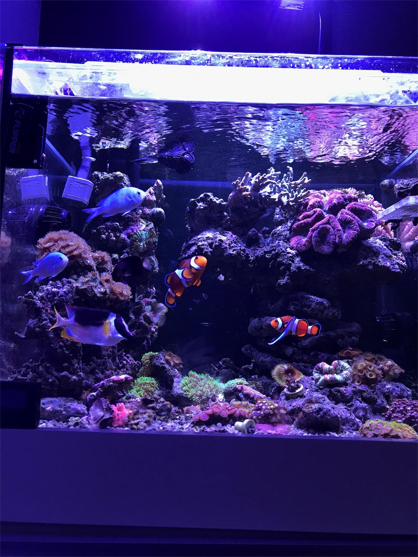 f:id:marine_aqua:20180213202314j:image