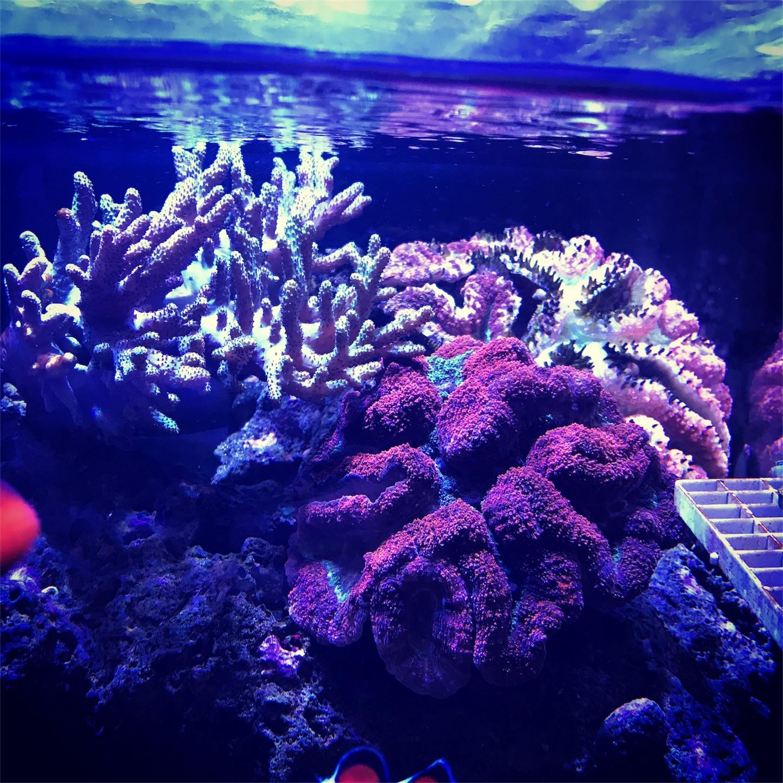 f:id:marine_aqua:20180213202338j:image