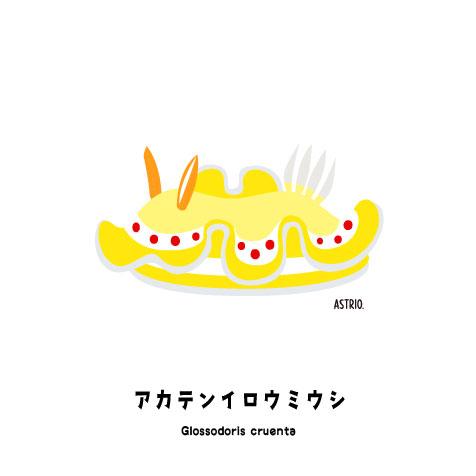 アカテンイロウミウシ