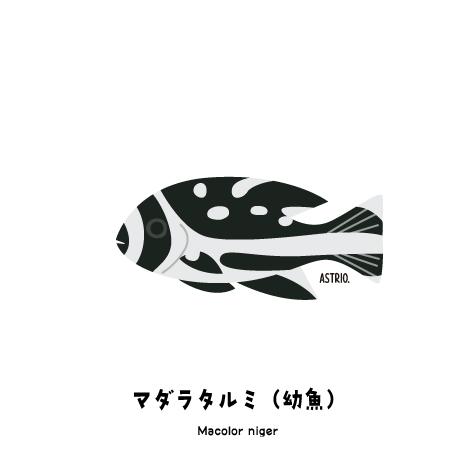 f:id:marinelifelog:20200429151953j:plain